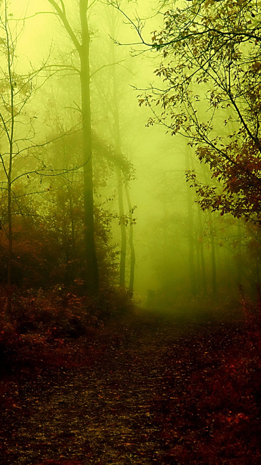 Eerie Forest Fog Android Wallpaper