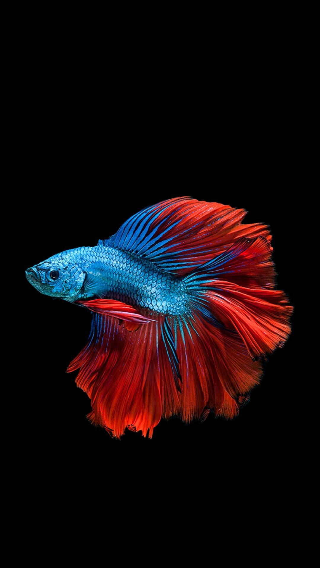 Fish · Fish · Fish WallpaperIphone …