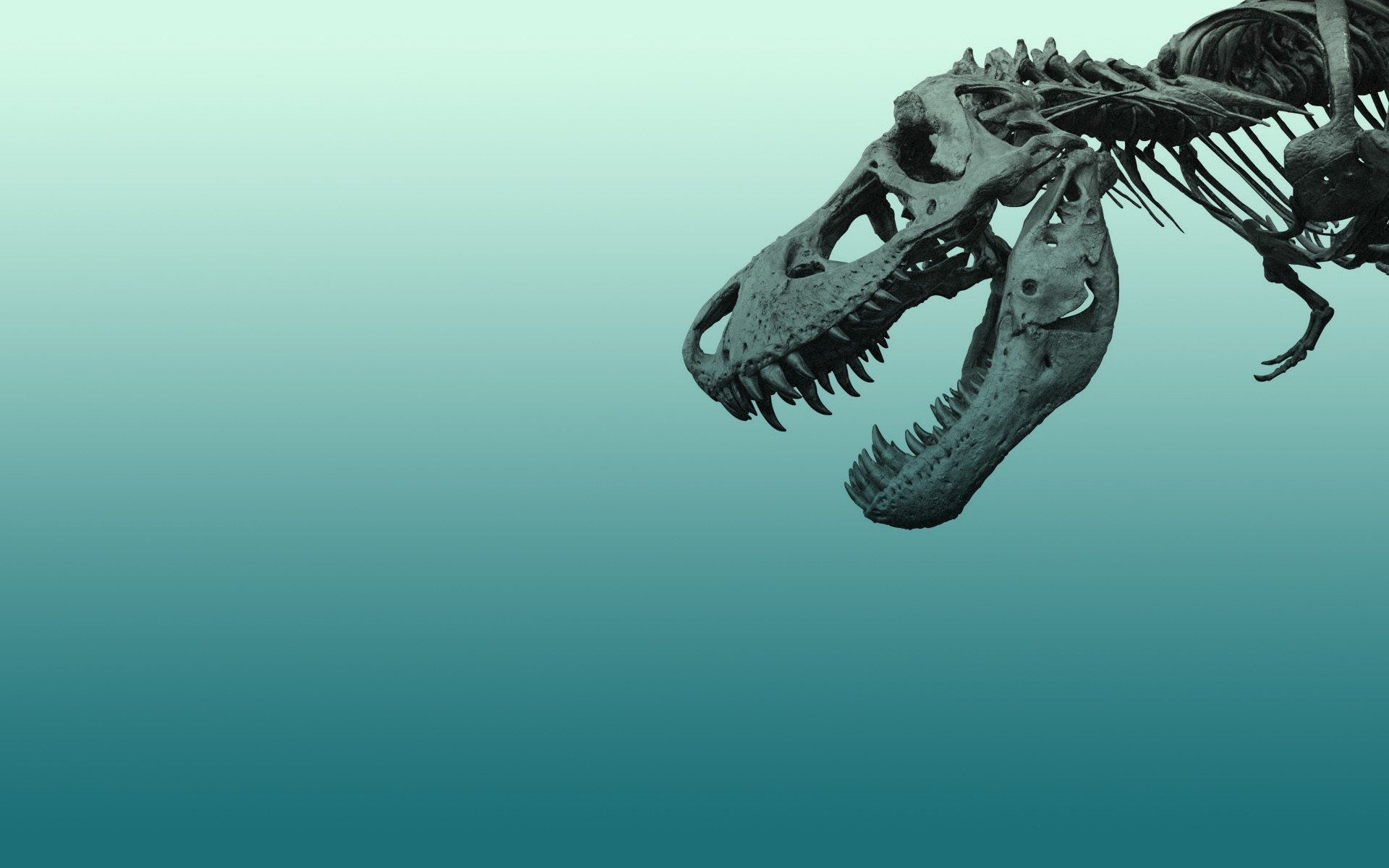 Dinosaur skeleton wallpaper ~ https://www.dinopit.com
