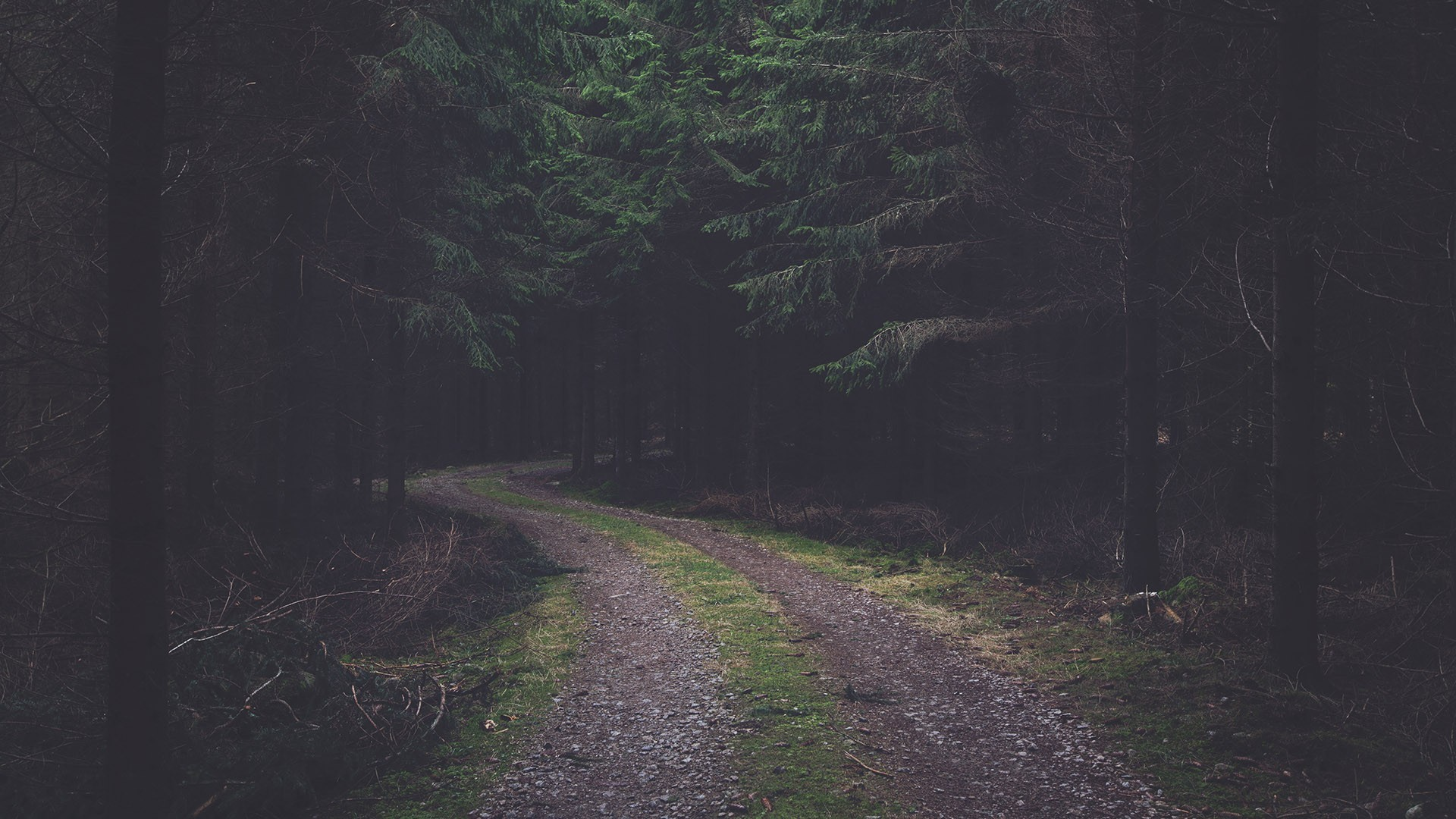 forest, Dirt road, Pine trees, Faded, Pine cones Wallpapers HD / Desktop  and Mobile Backgrounds