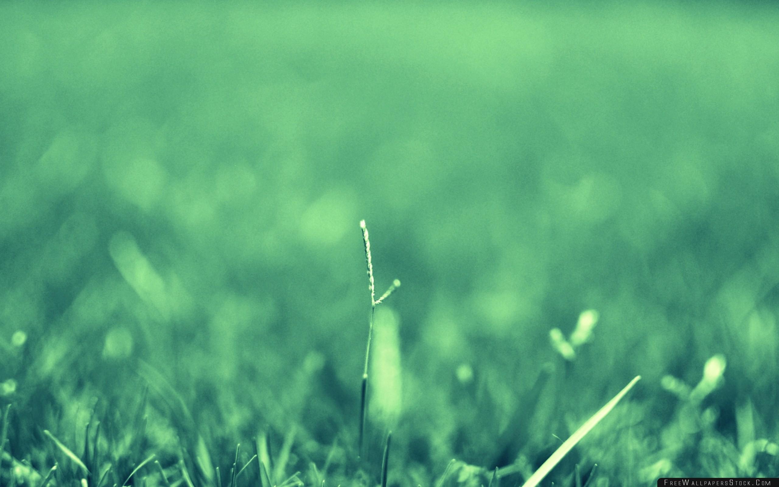 Download Free Wallpaper Herbs Plants Blurred Faded