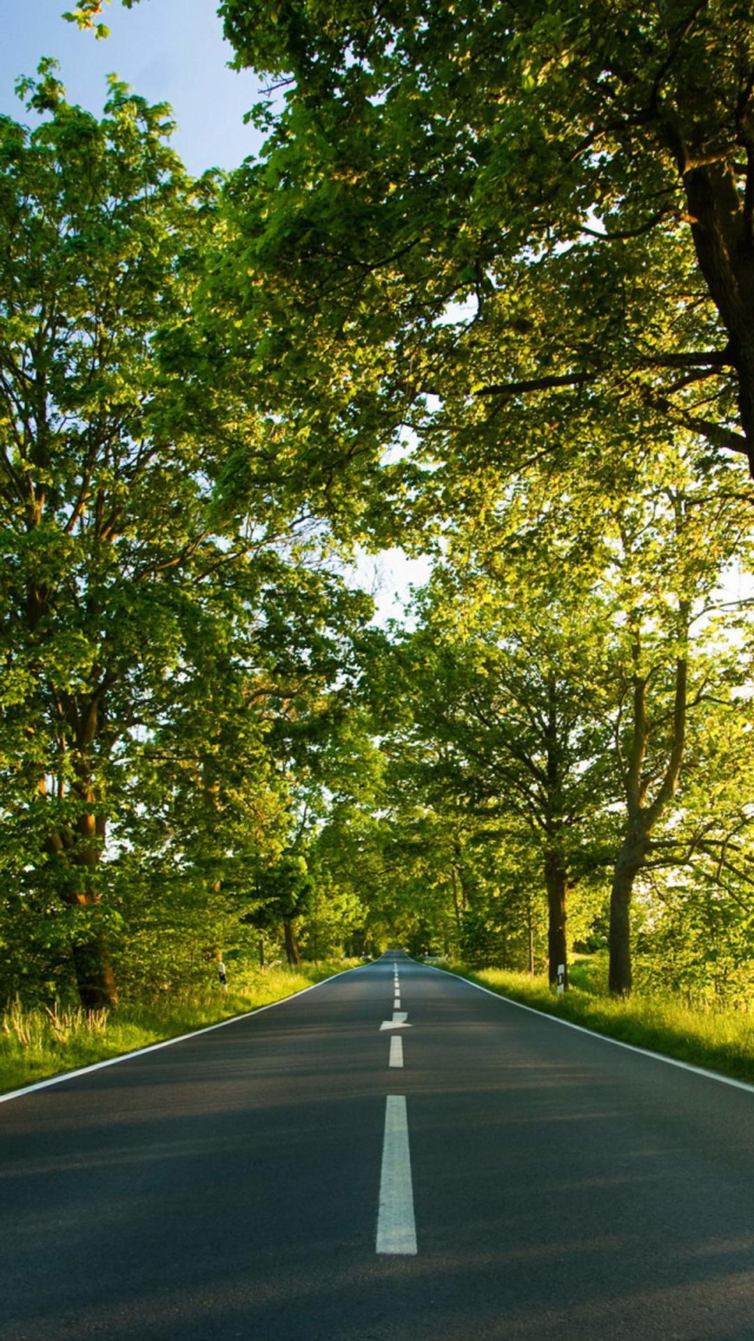 Summer Road Trees