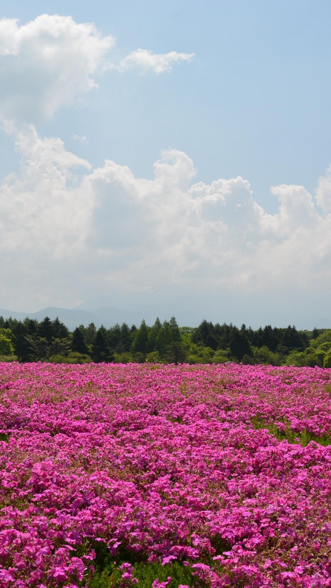 Field Flowers Pink Summer #iPhone #6 #plus #wallpaper