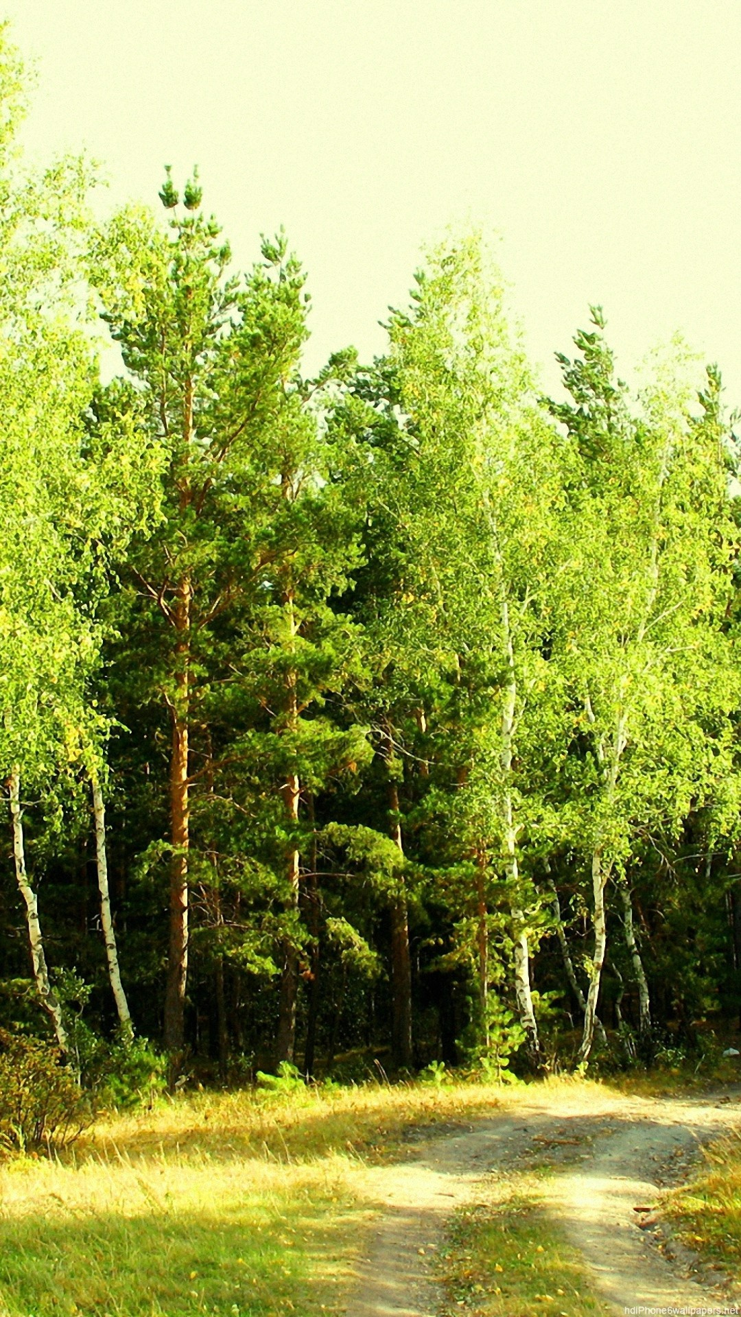 summer forest nature landscape green iPhone 6 wallpapers HD – 6  Plus backgrounds