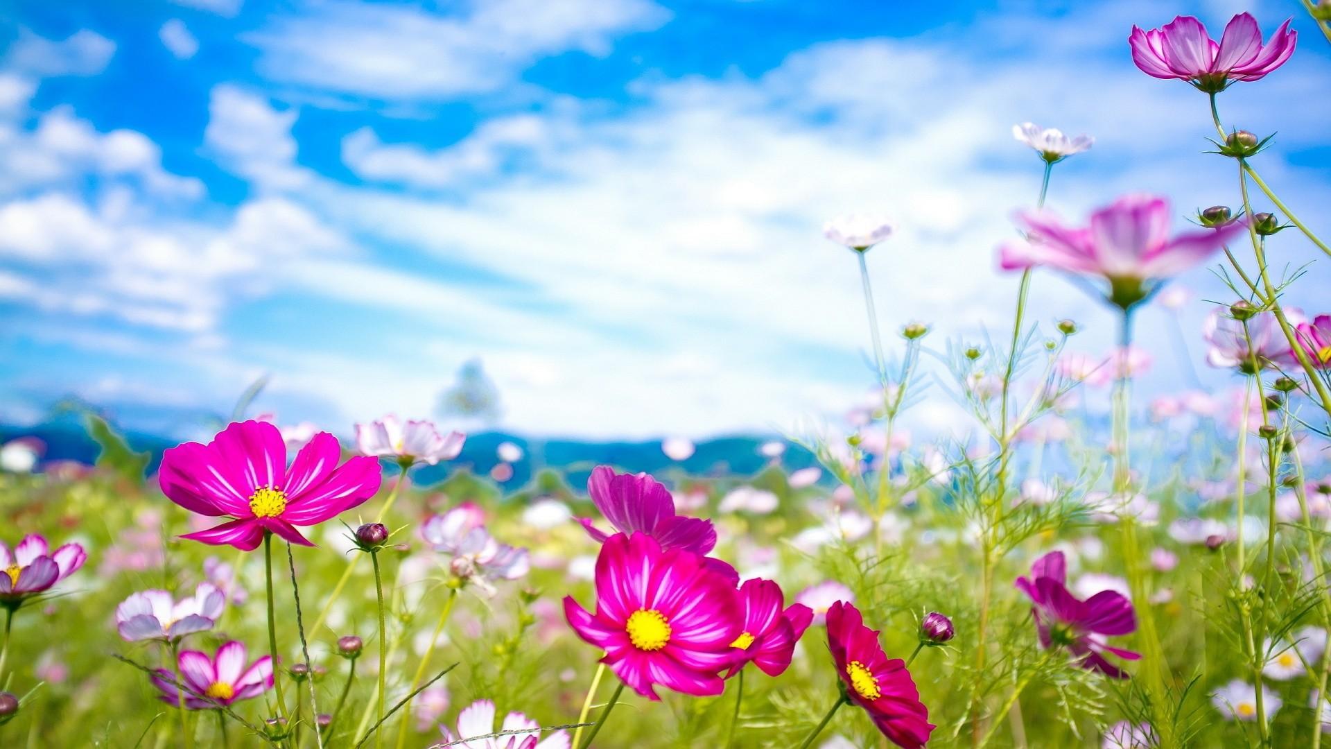 Summer Flowers Wallpaper Widescreen …