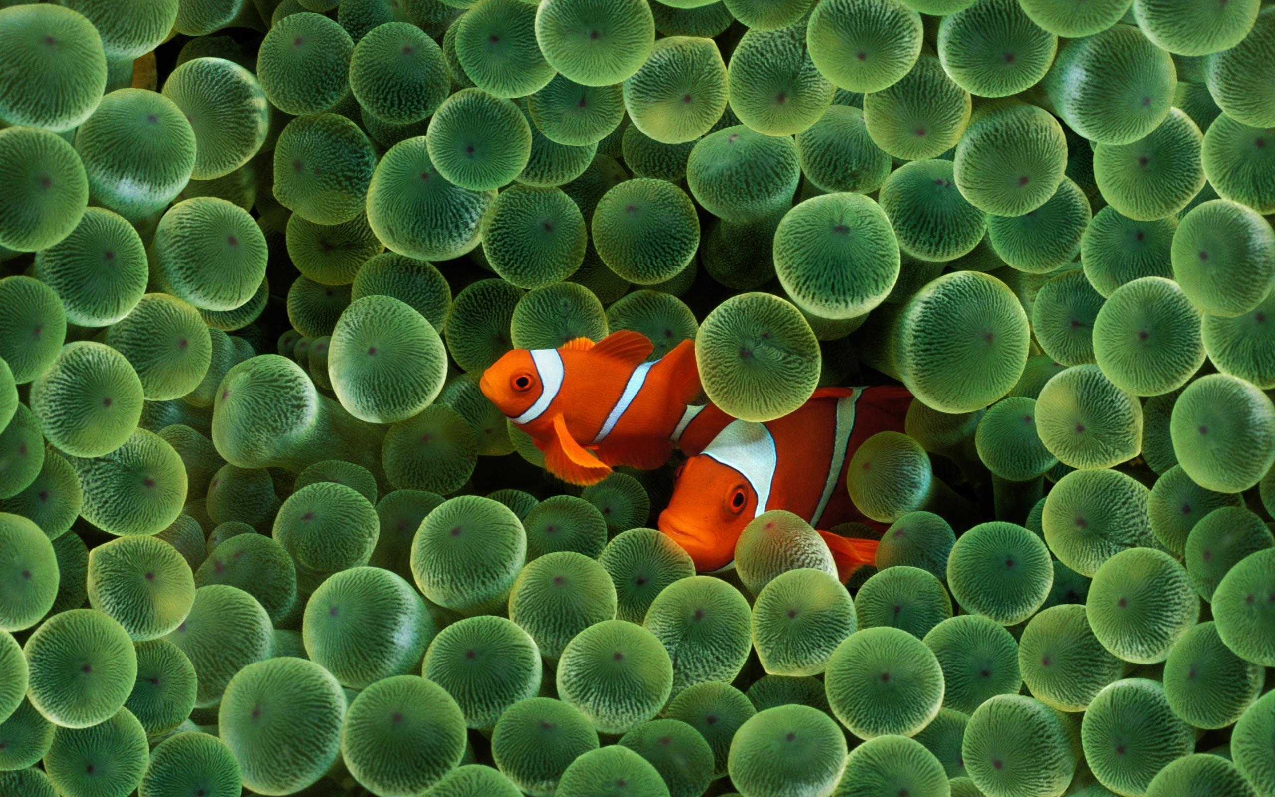 … aquarium live wallpaper free download for laptop aquarium live …