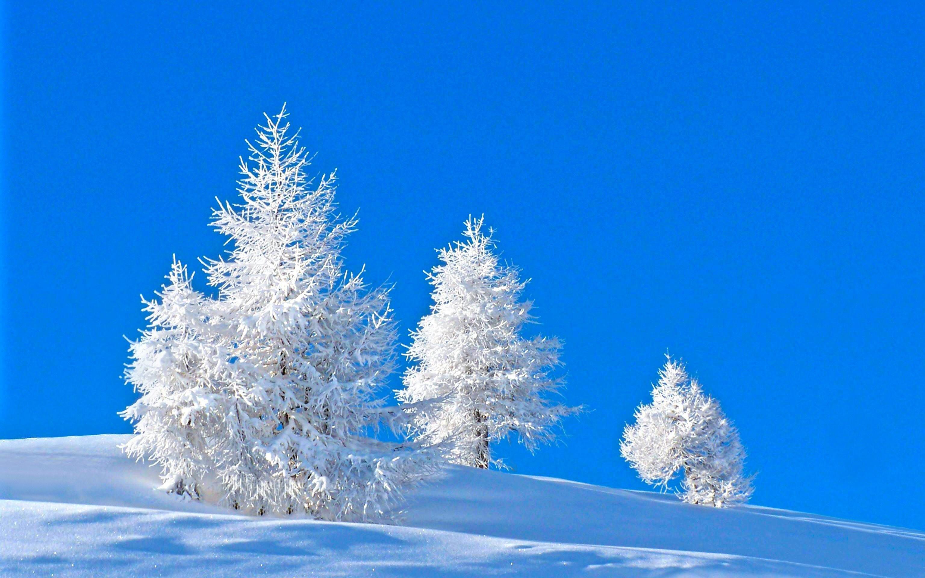 winter hq pic