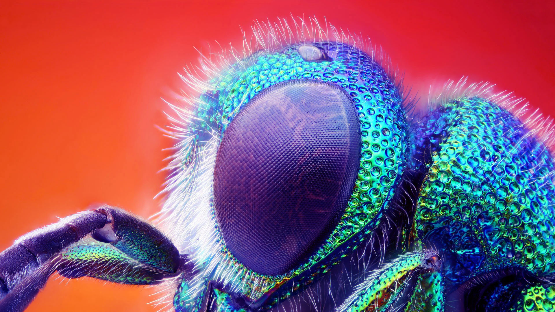 Macro Photography Wallpaper with bugs life – Eye of fly in high resolution