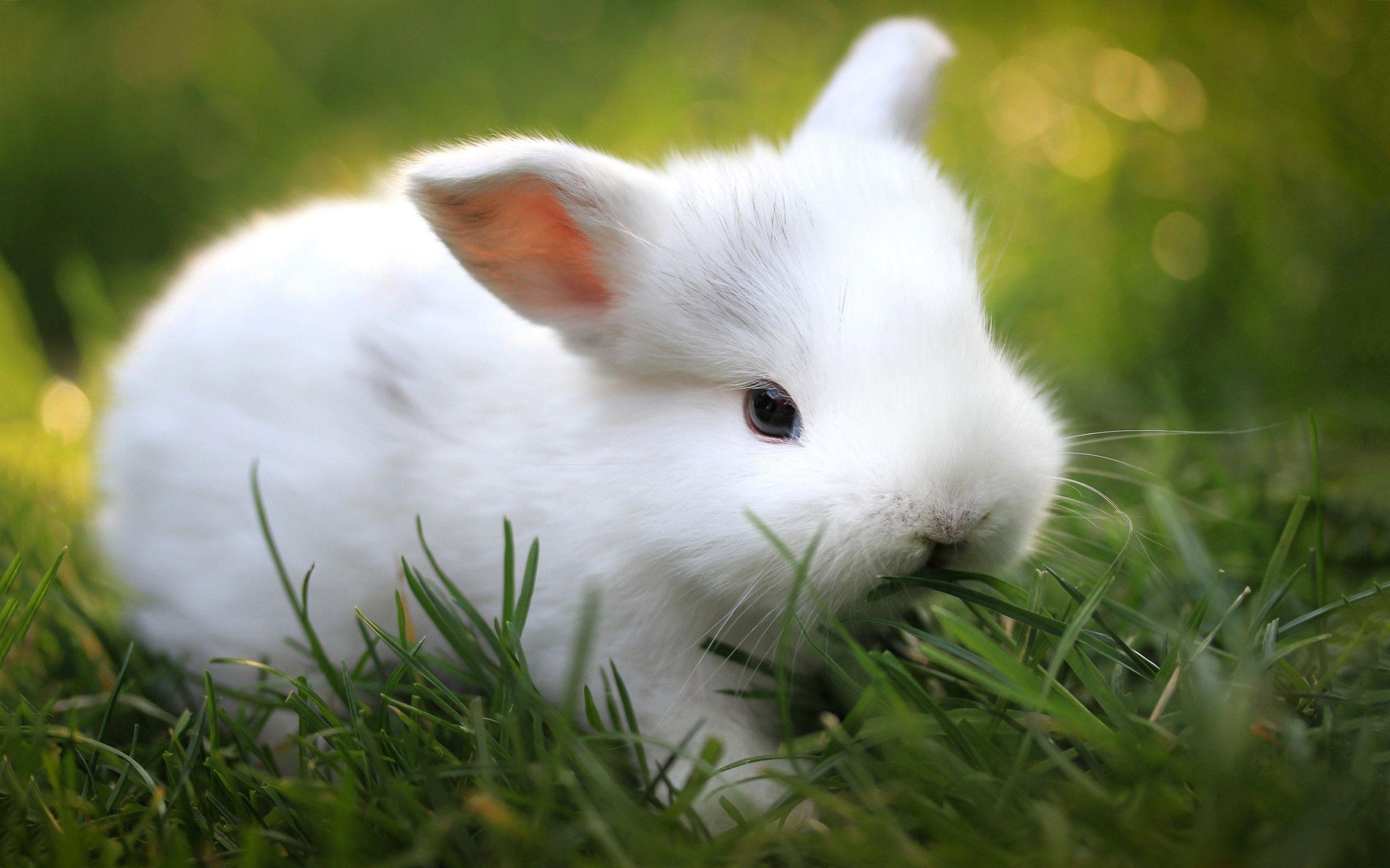Cute White Bunny Wallpaper 39765 in Animals – Telusers.com