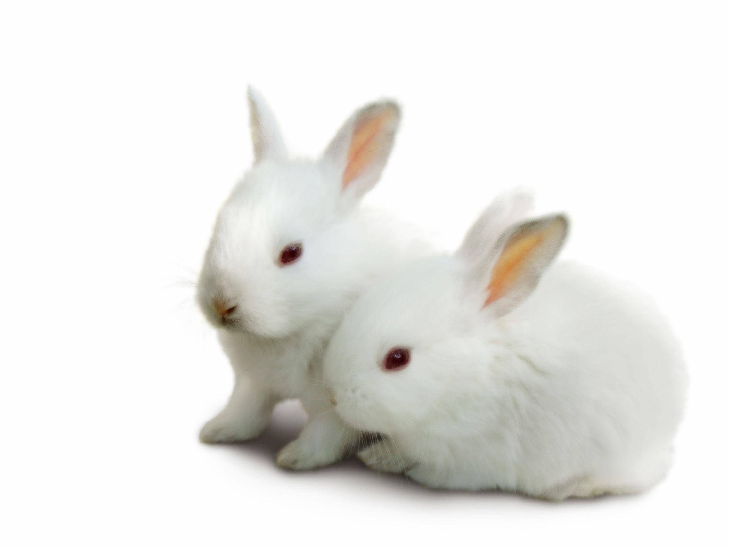 Bunny HD Wallpapers – HD Wallpapers Inn
