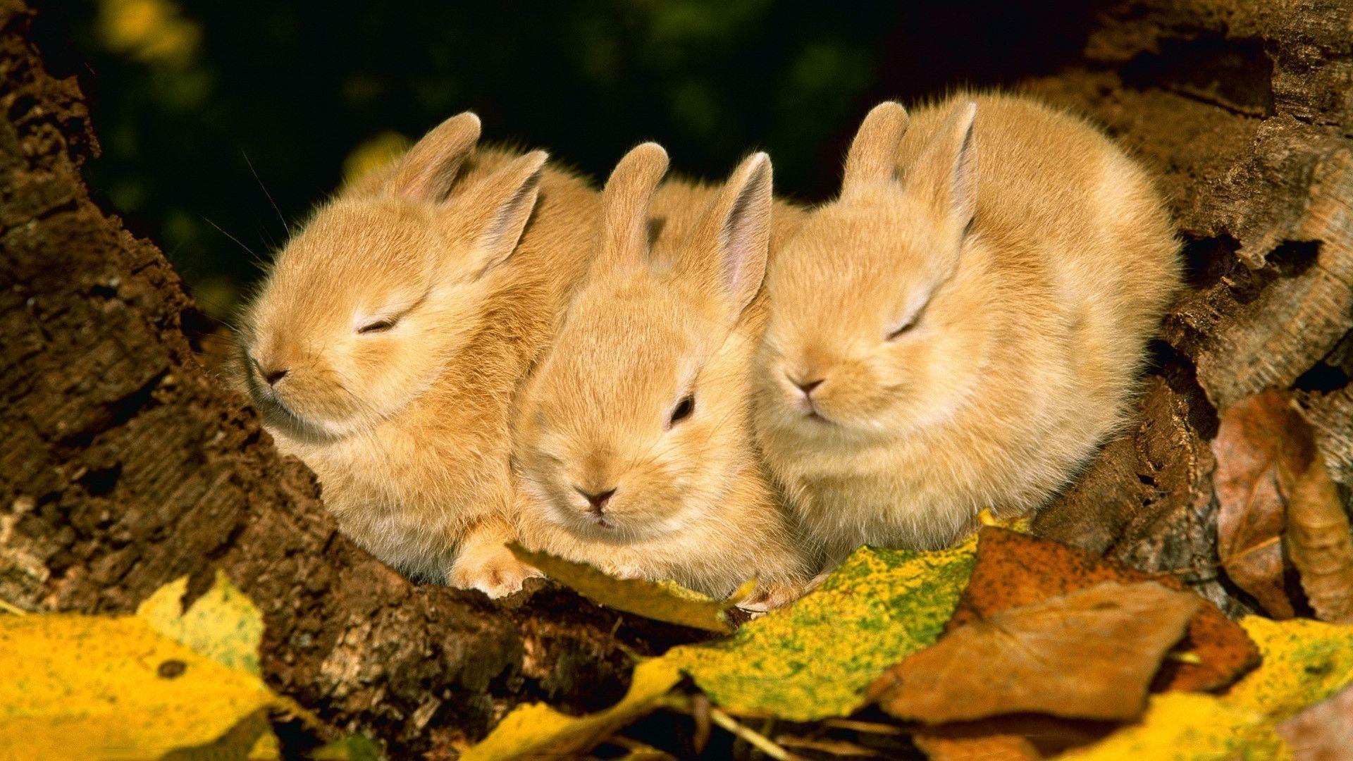 Sleeping bunnies Wallpaper