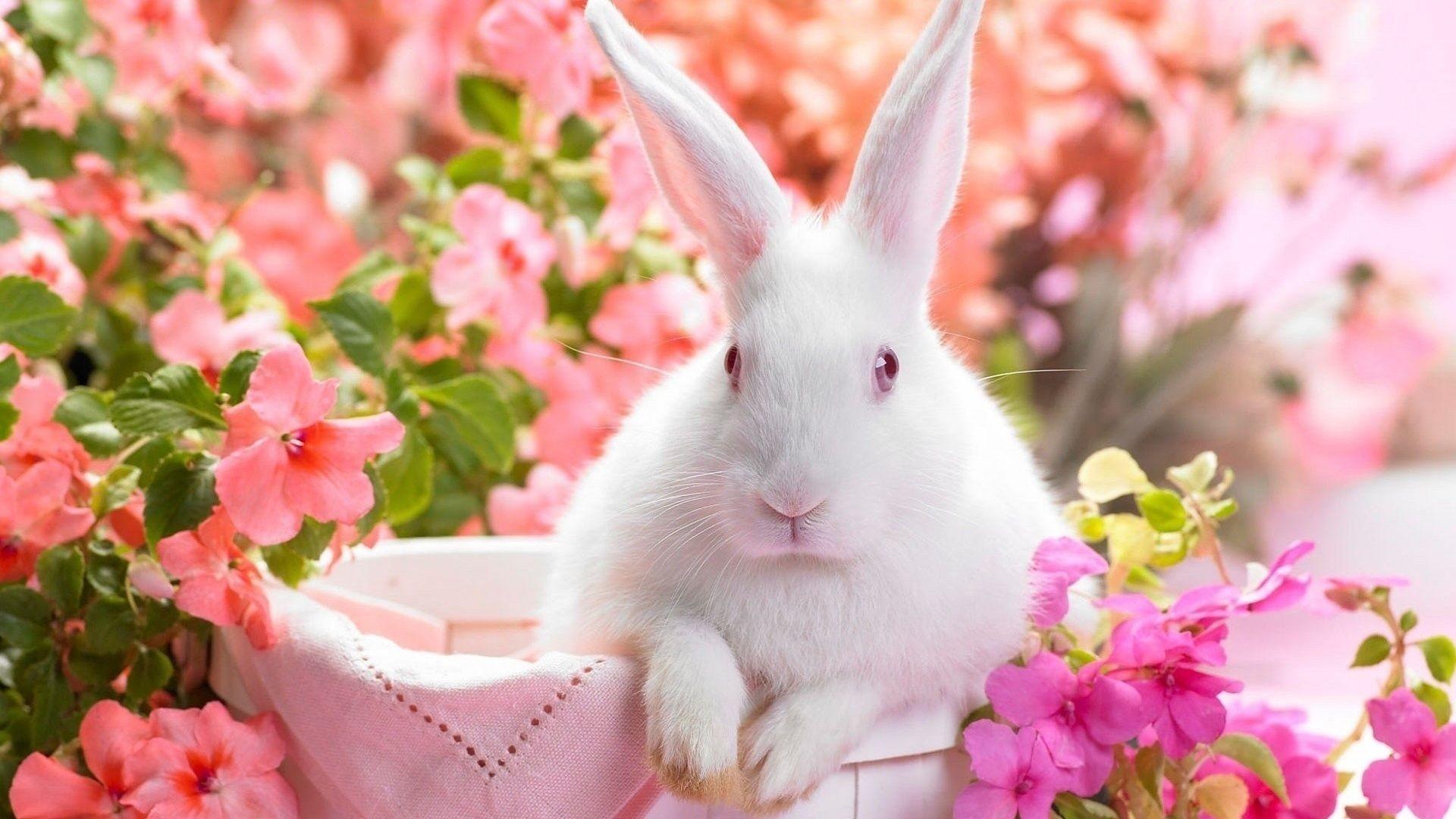68 Playboy Bunny