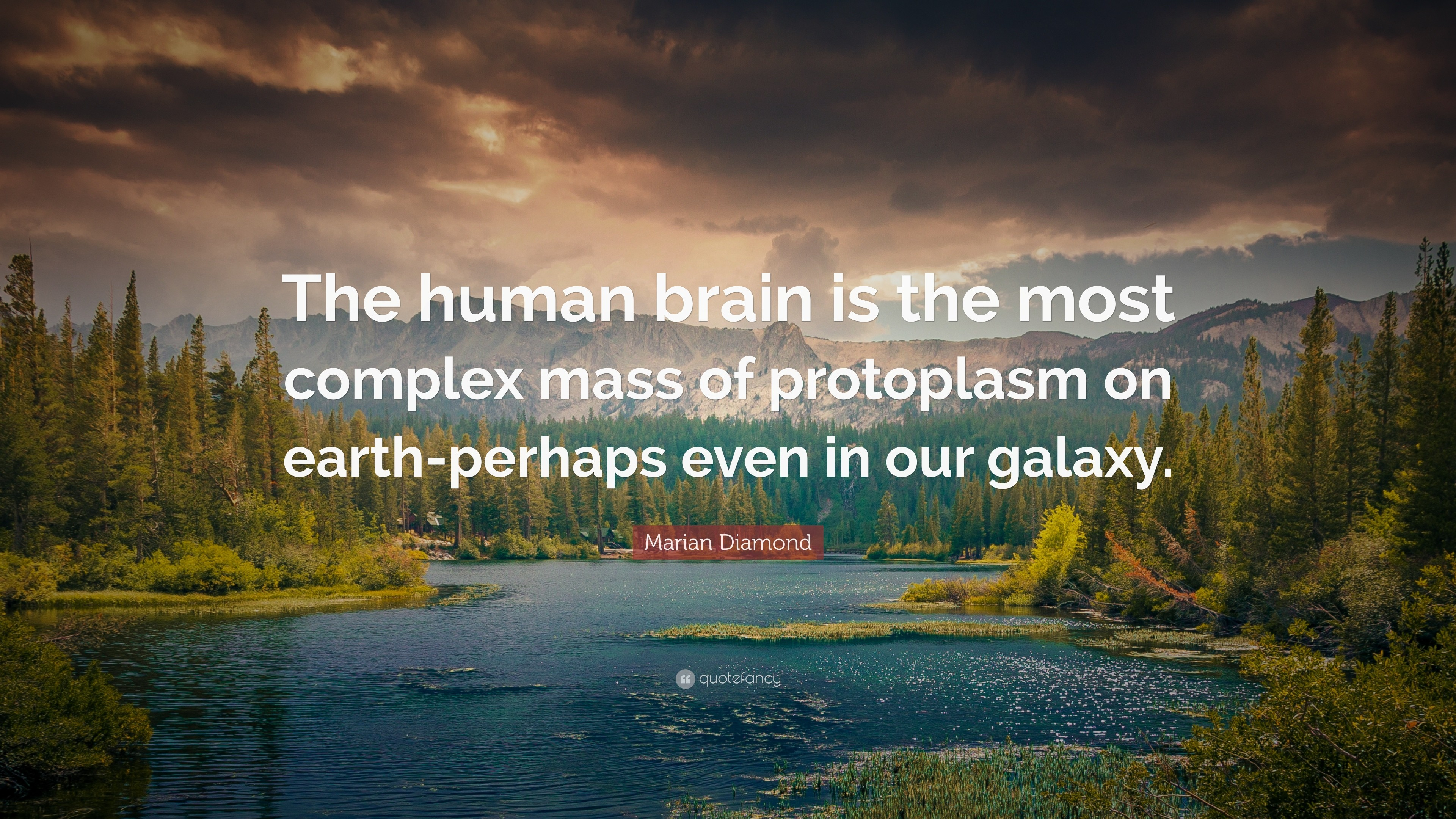 """Marian Diamond Quote: """"The human brain is the most complex mass of  protoplasm on"""