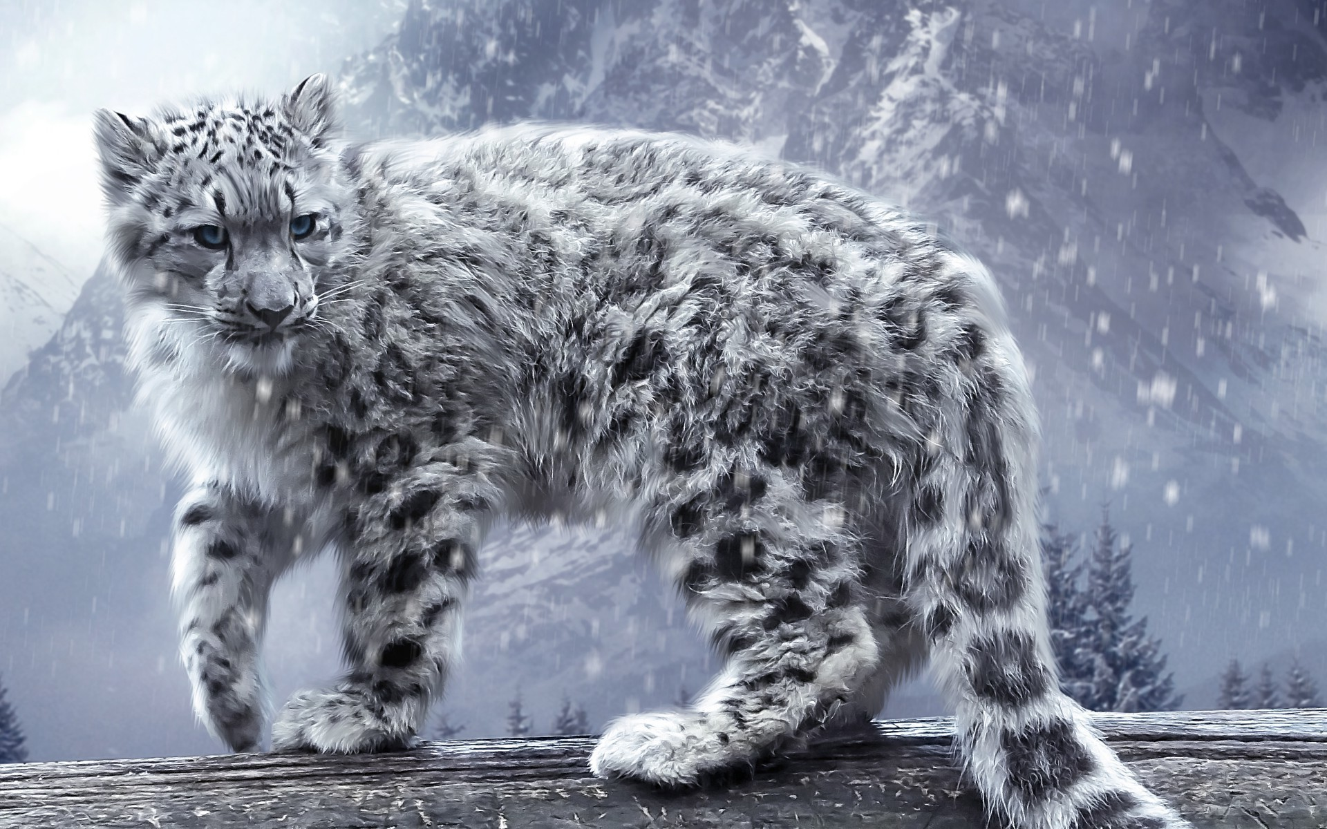 Adorable HDQ Backgrounds of Snow Leopard, px