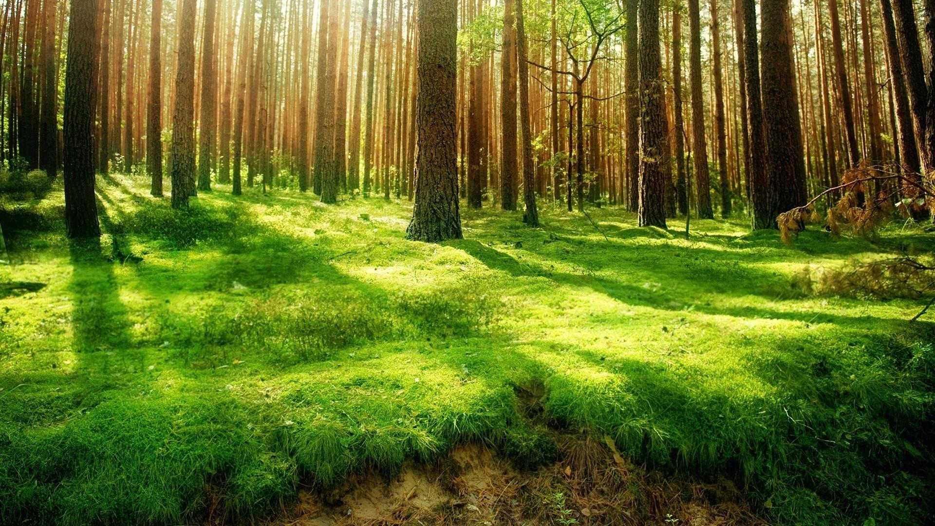 Imagenes Naturaleza Hd En Hd Gratis Para Descargar 6 HD Wallpapers