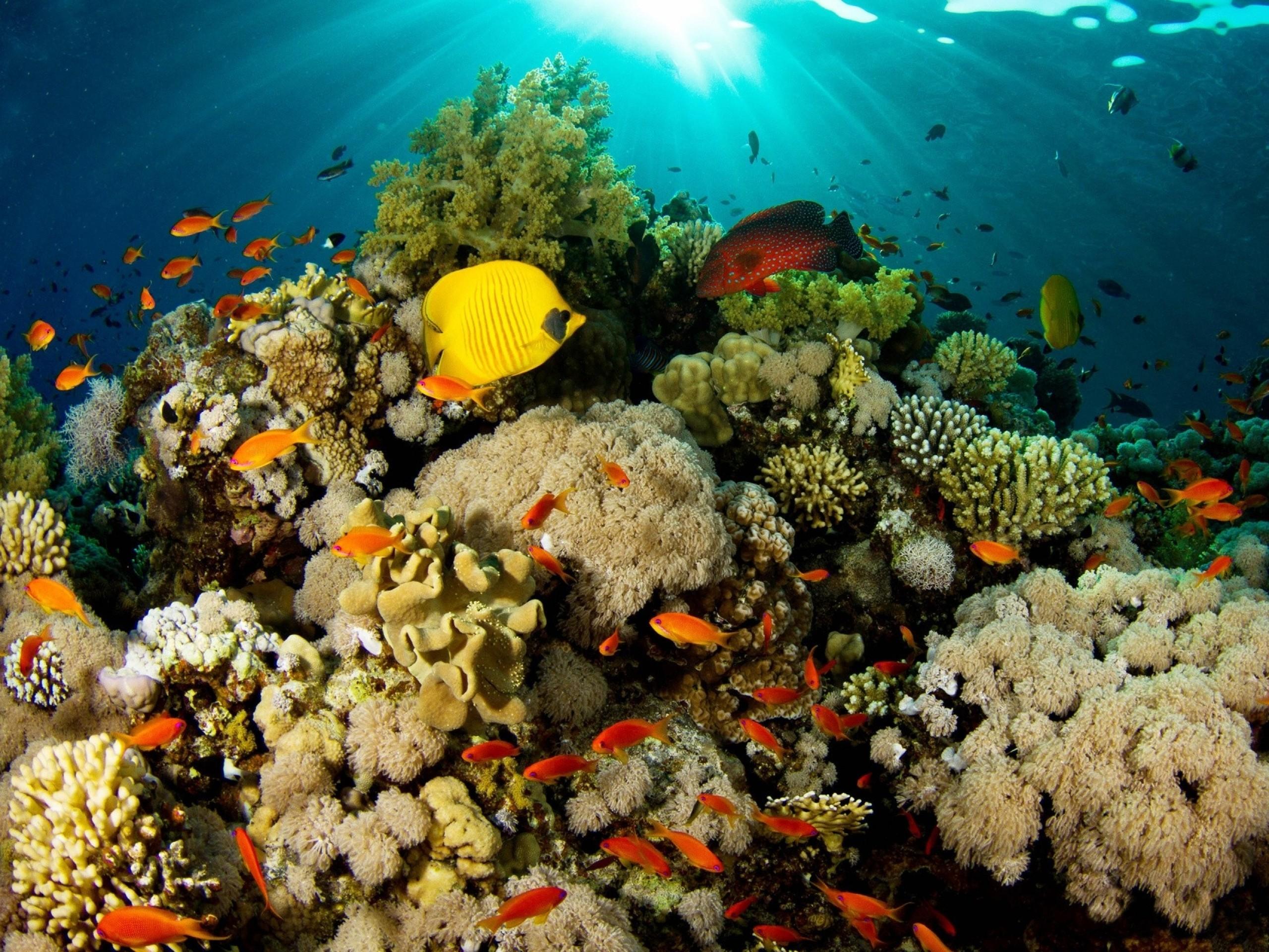 Peces tropicales – paisaje natural