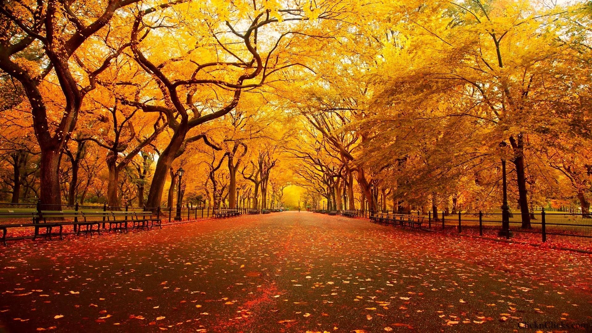 … imagenes-de-otoño-hd-gratis …