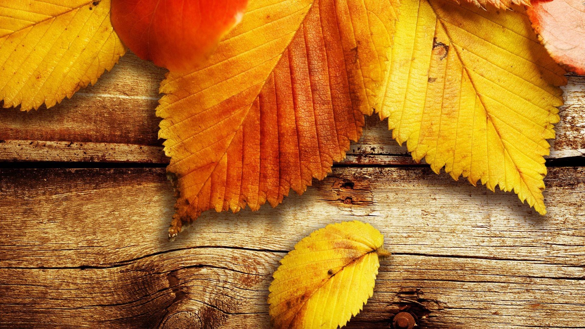 … hojas-de-otoño-para-fondos-de-pantalla-hd …