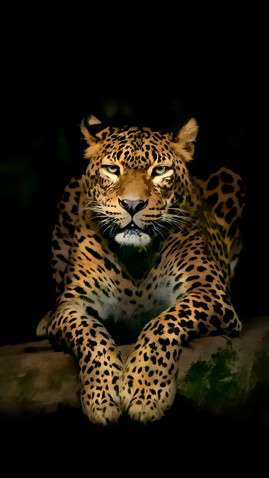 Leopard iPhone 4k ultra HD Wallpapers | HD Wallpapers