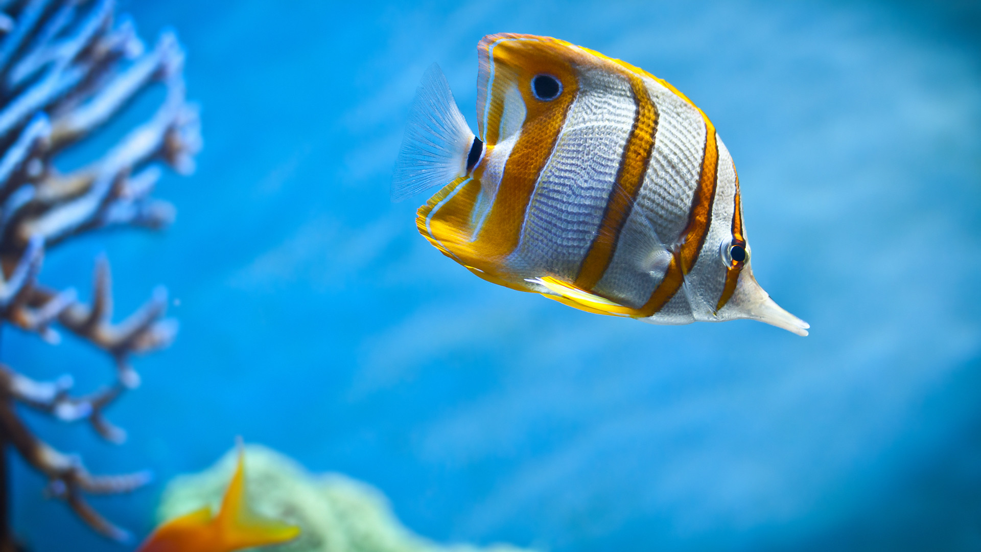 Fish Wallpaper : Find best latest Fish Wallpaper in HD for your PC desktop  background & mobile phones.