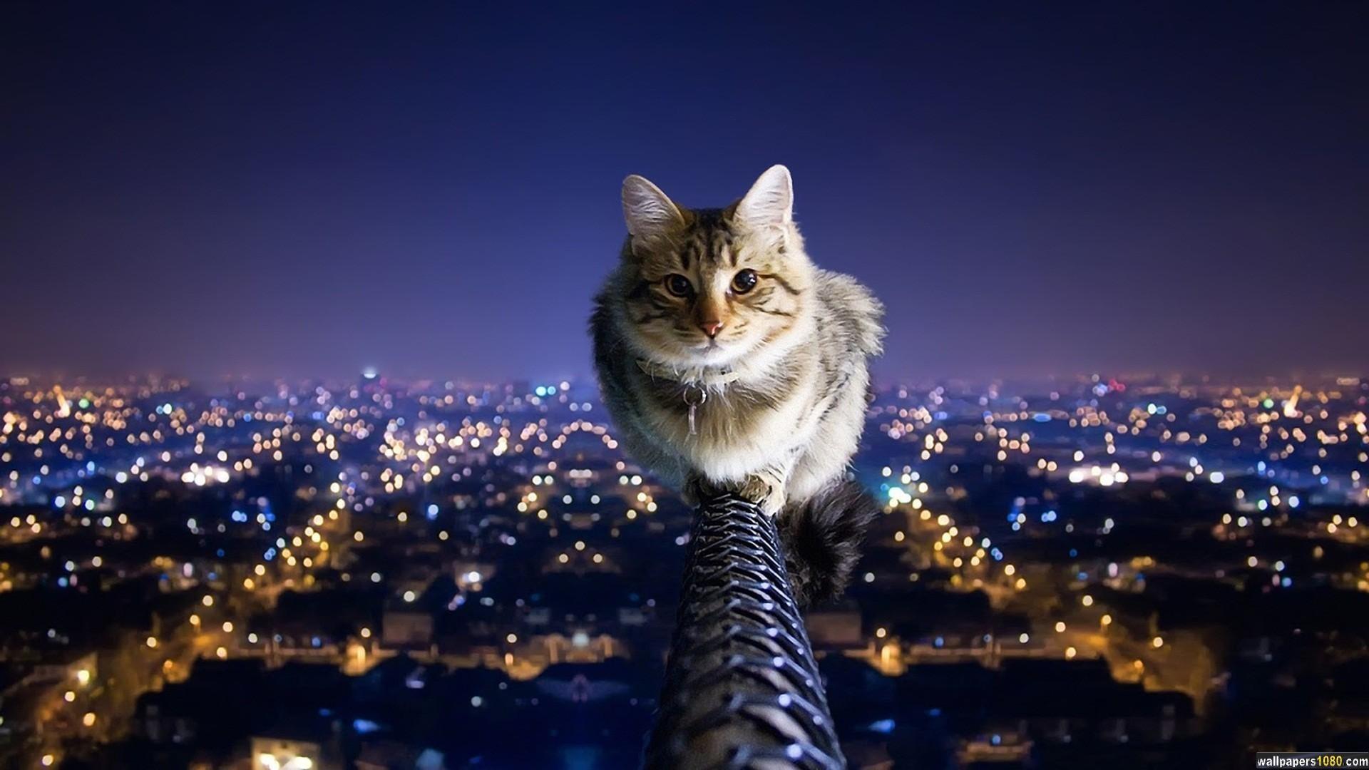 Cat Animal Windows 10 Wallpaper | 1080p Wallpapers, Hd Wallpapers .