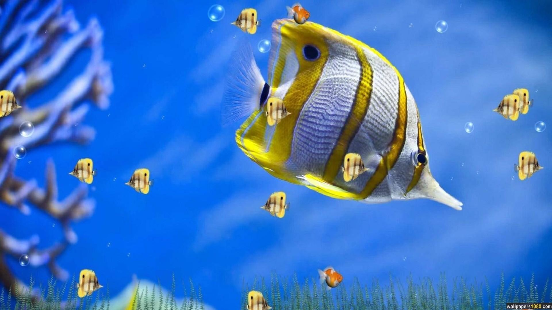 3D Fishes Windows 10 Wallpaper | 1080p Wallpapers, Hd Wallpapers .
