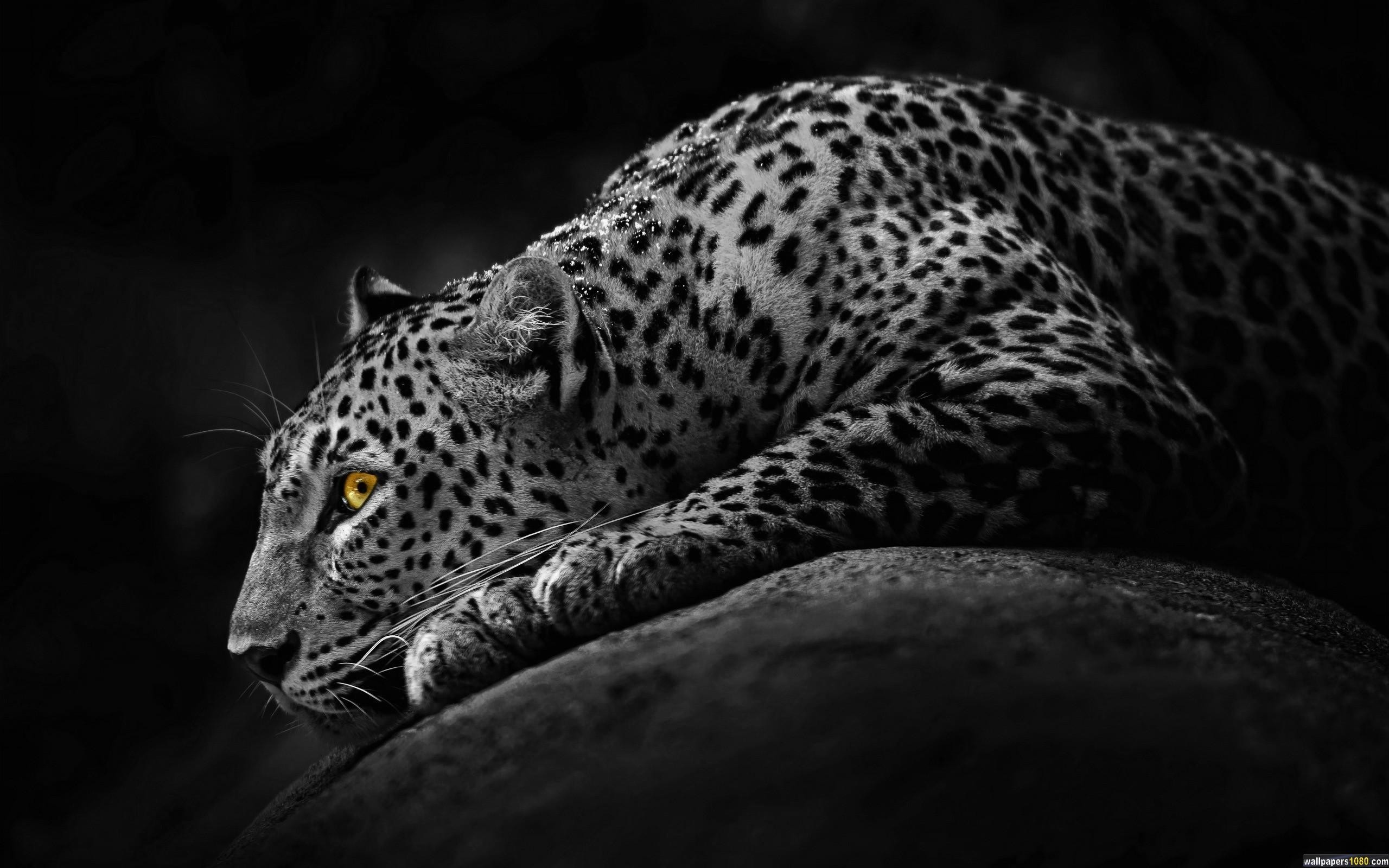 Download Black Dark Jaguar Windows 10 Wallpaper | 1080p Wallpapers, Hd ..