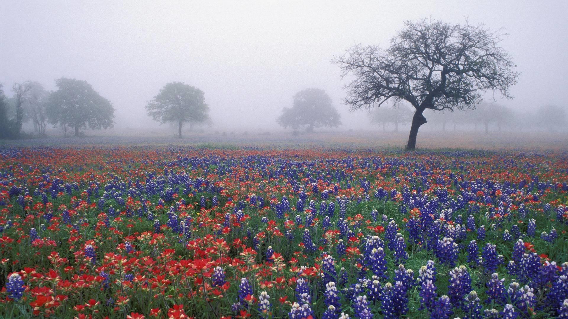 … texas landscape wallpaper hd wallpaper; bluebonnet wallpapers wallpaper  cave …