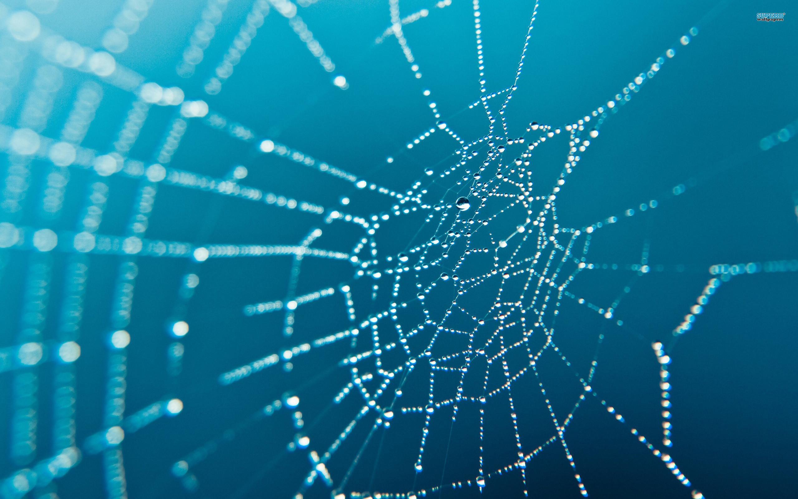 spider-web-wallpaper-2
