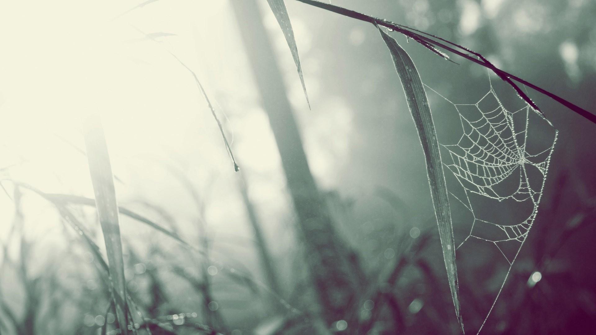Spider Web Wallpaper 41574