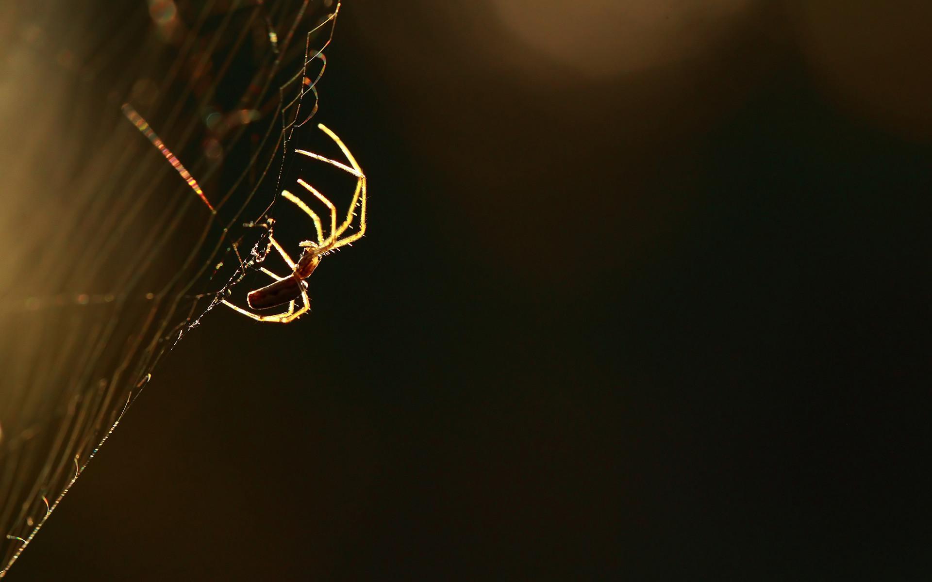 Fantastic Spider Web Wallpaper