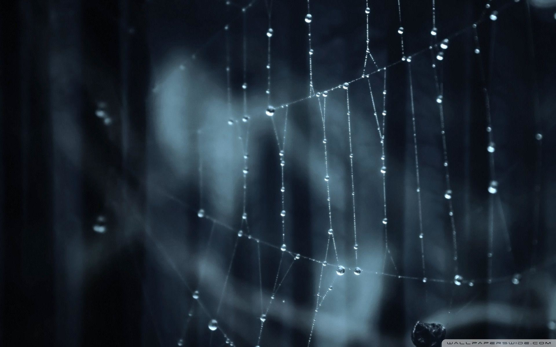 Spider Web Windows 8.1 Theme and Wallpapers   Windows 8.1 Themes .