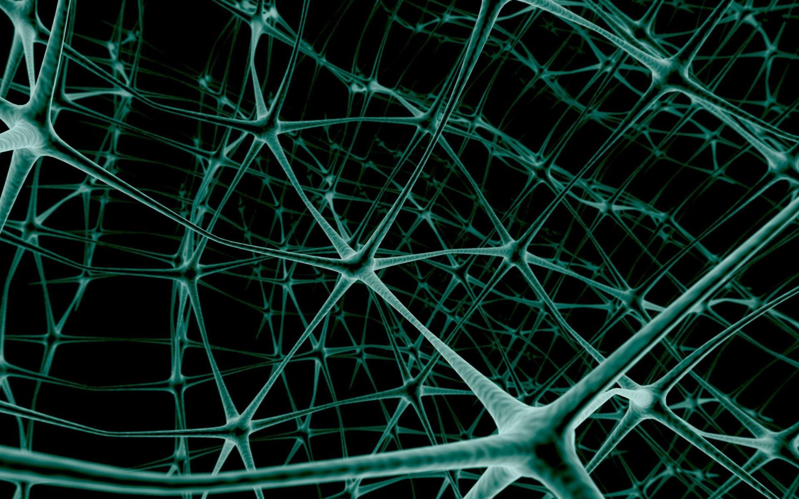 Spider Web 705019