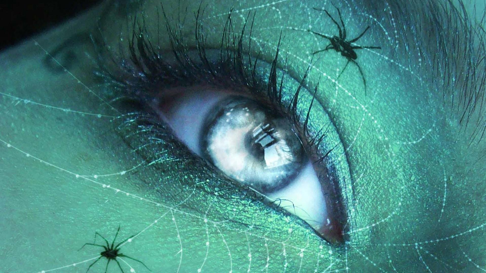 hd pics photos beautiful cute eye close up spider web macro hd quality  desktop background wallpaper