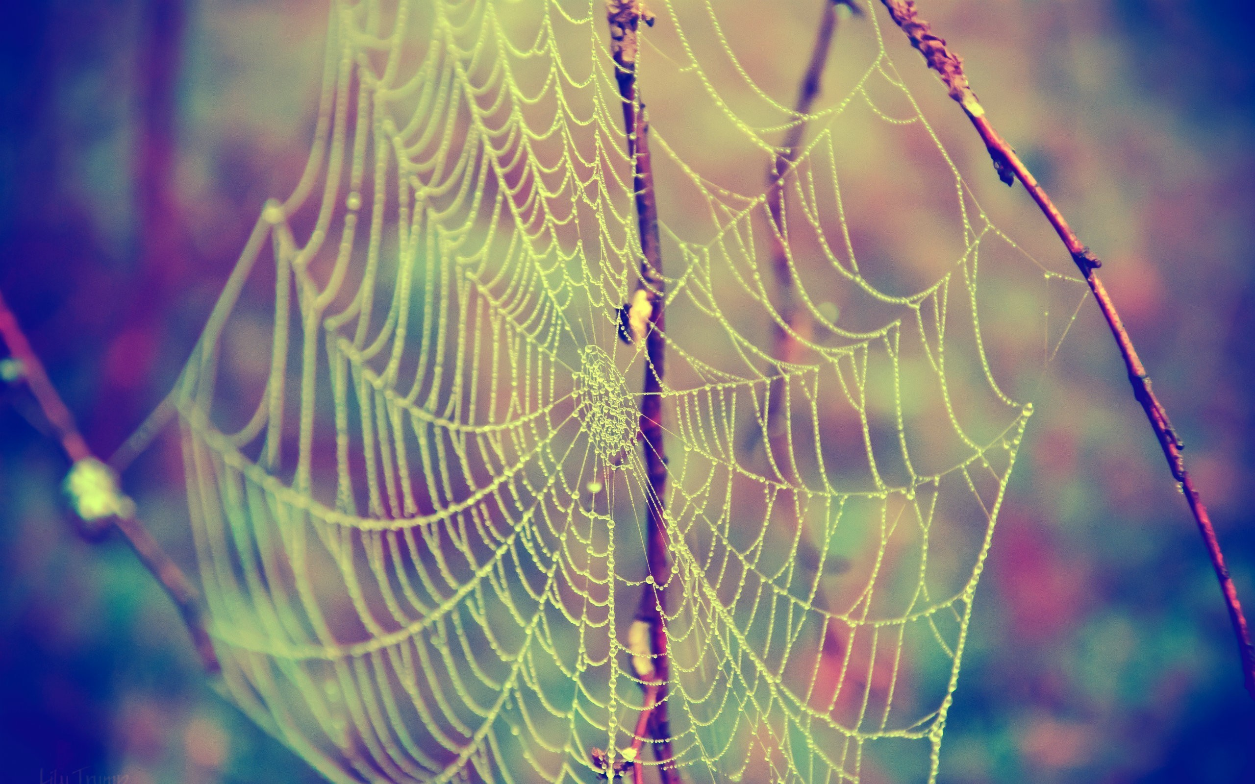 Nature insects web spider webs wallpaper