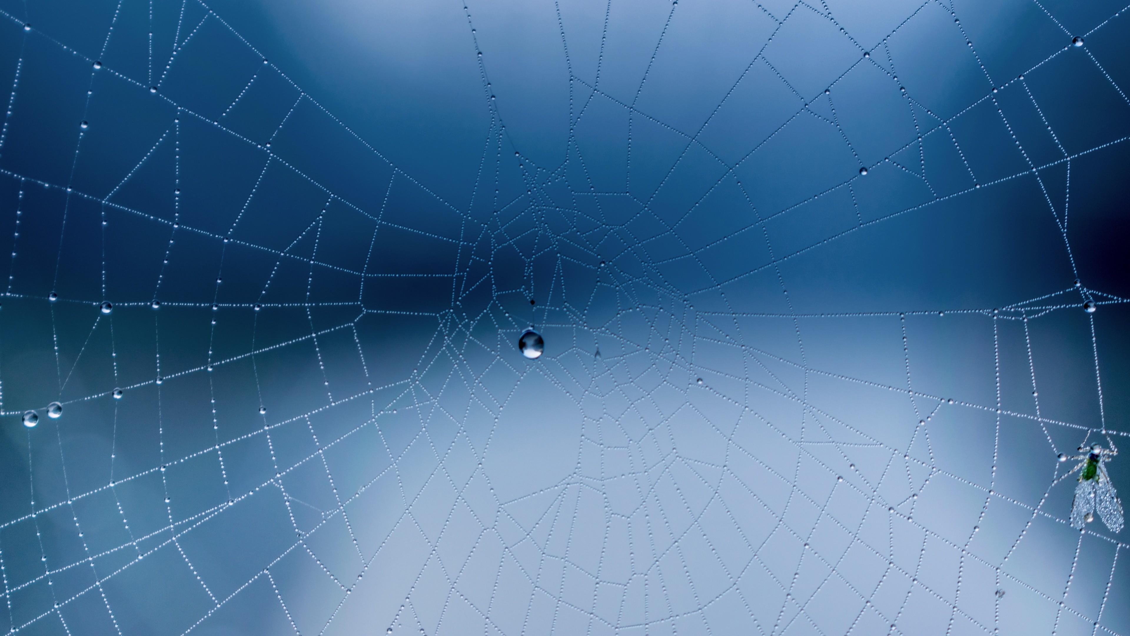 Wallpaper spider web, close-up, drops