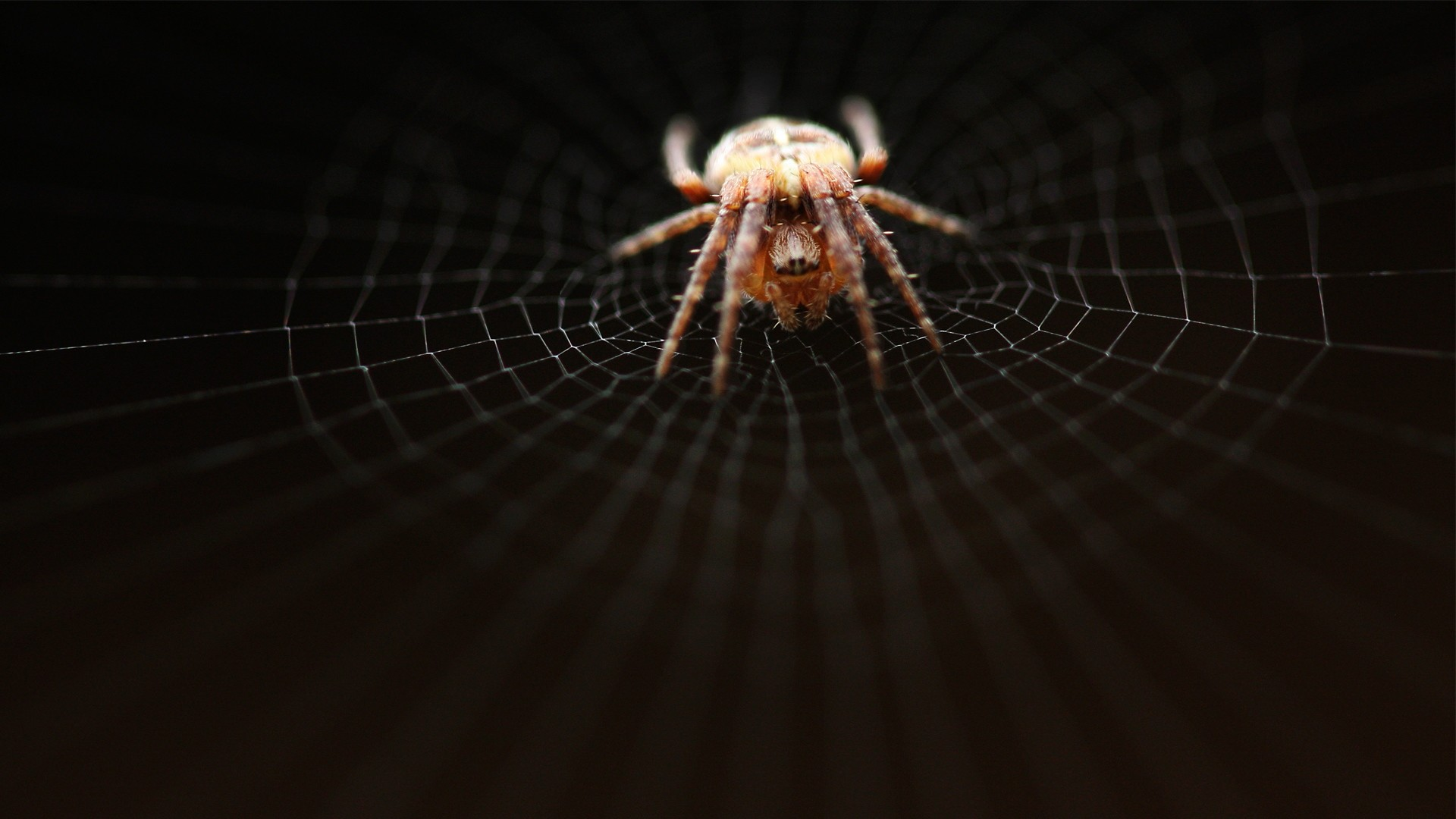 Get the latest spider, web, net news, pictures and videos and learn all  about spider, web, net from wallpapers4u.org, your wallpaper news source.