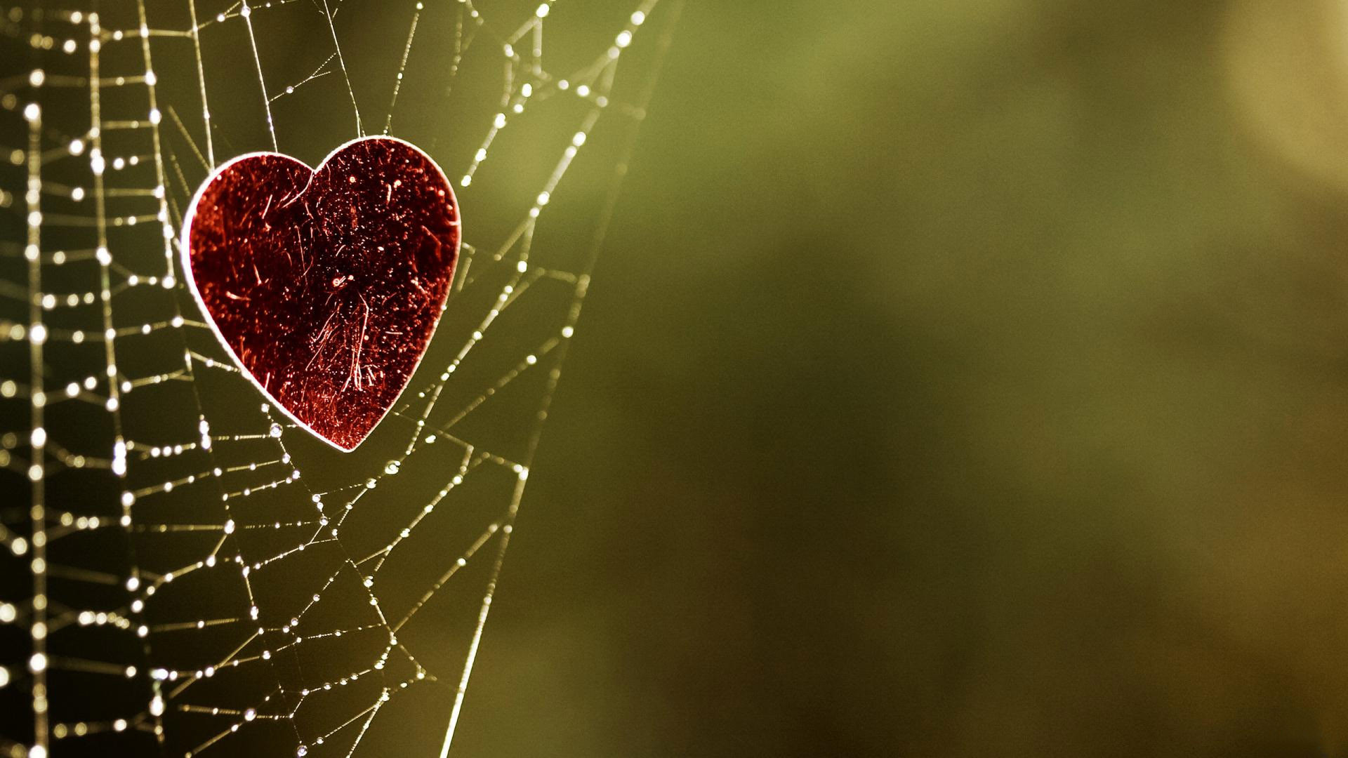 Heart Caught In A Spider Web HD Wallpaper