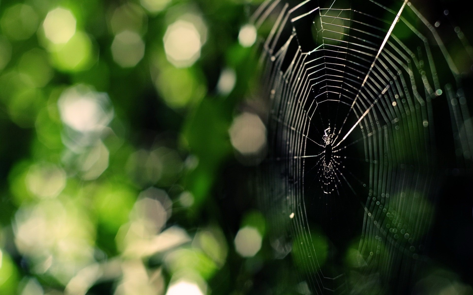 wallpapers free spider web, (375 kB)