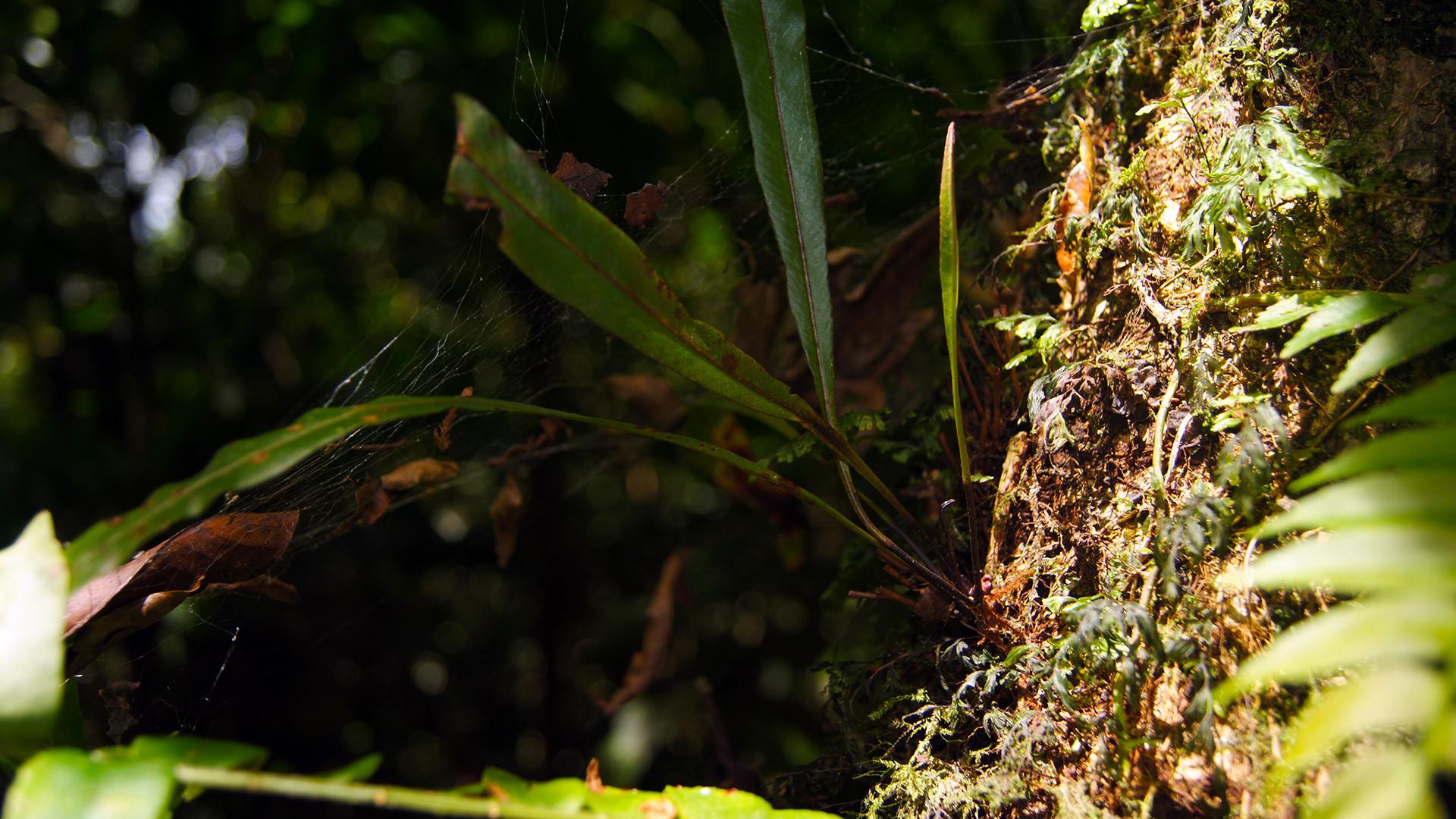 Tenorio Volcano Rain Forest Spider Web Wallpaper 55589