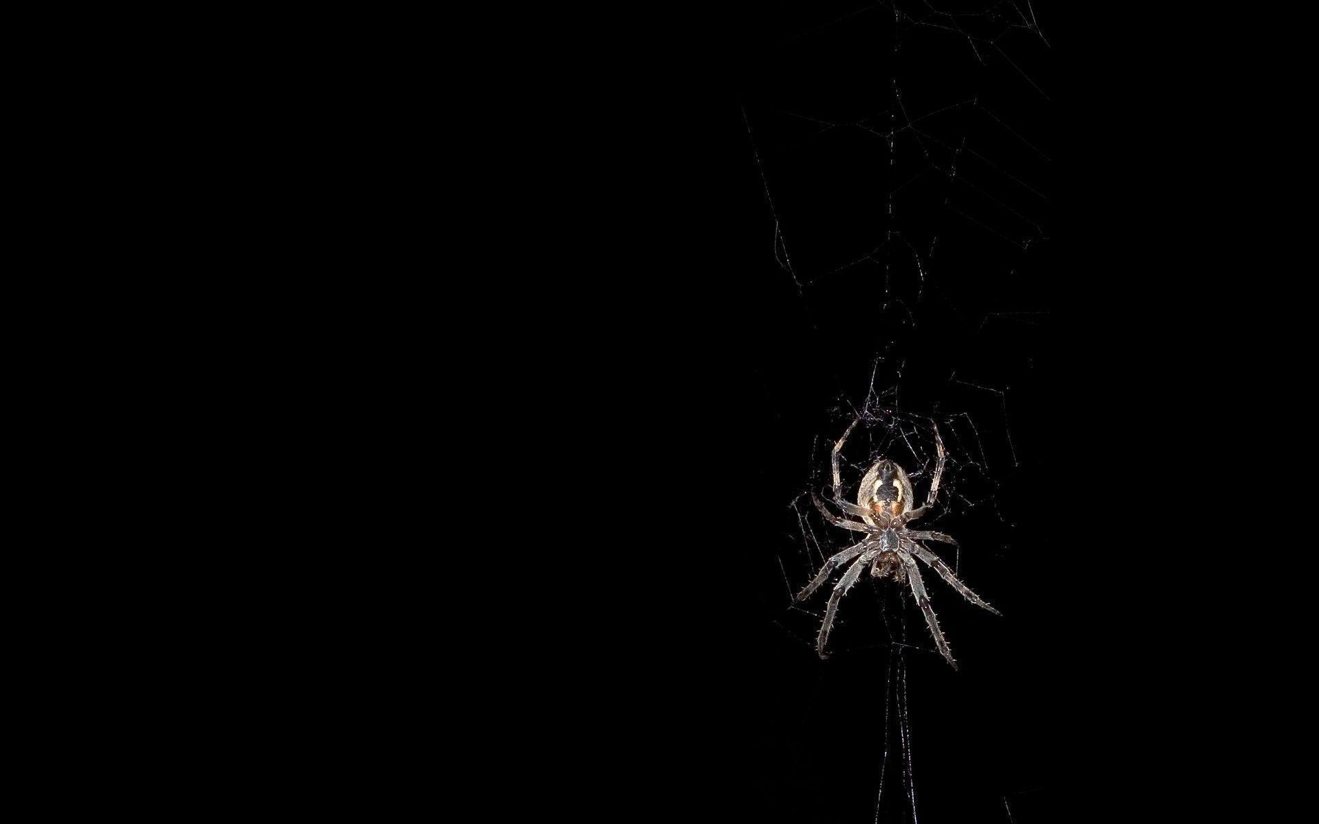 Spider Web – wallpaper.