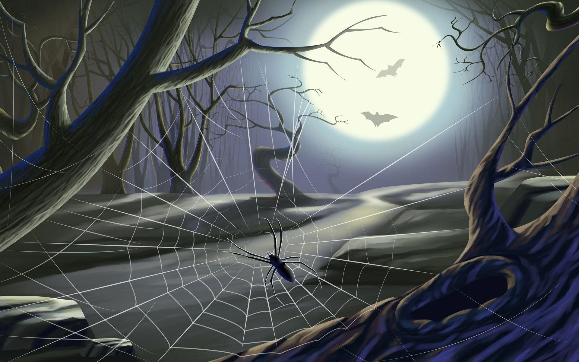 Spider on a Spider Web Wallpapers – HD Wallpapers Inn