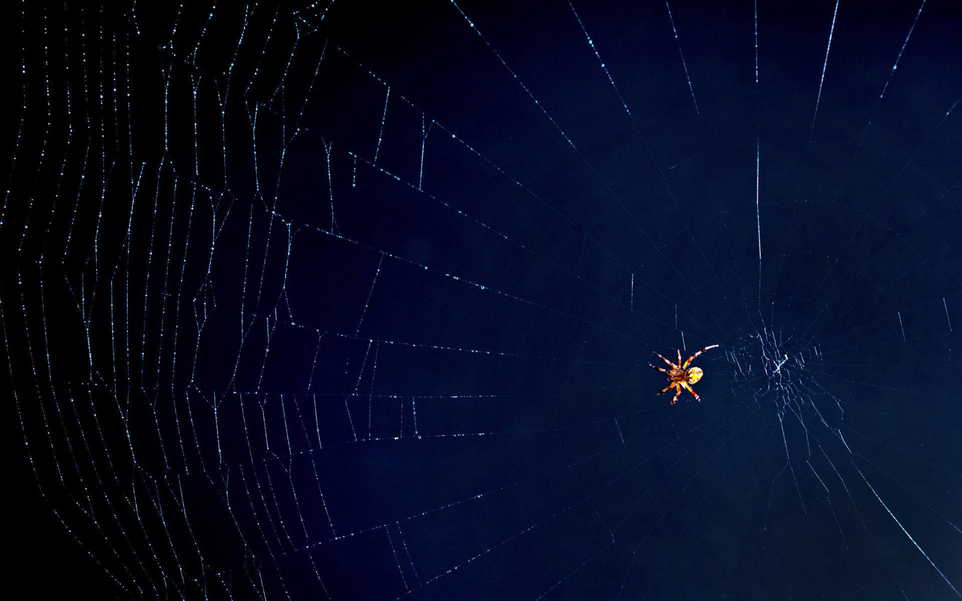 Top Spider Web Fractal Wallpaper 1920×1080 Wallpapers
