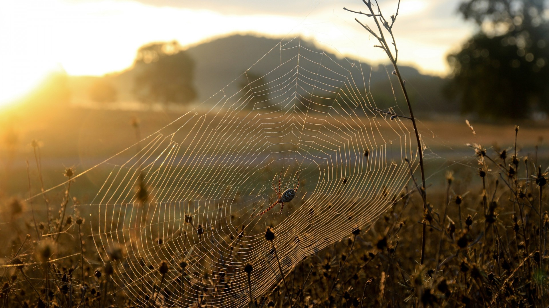 Wallpaper spider, web, sun, light, grass, dry, faded