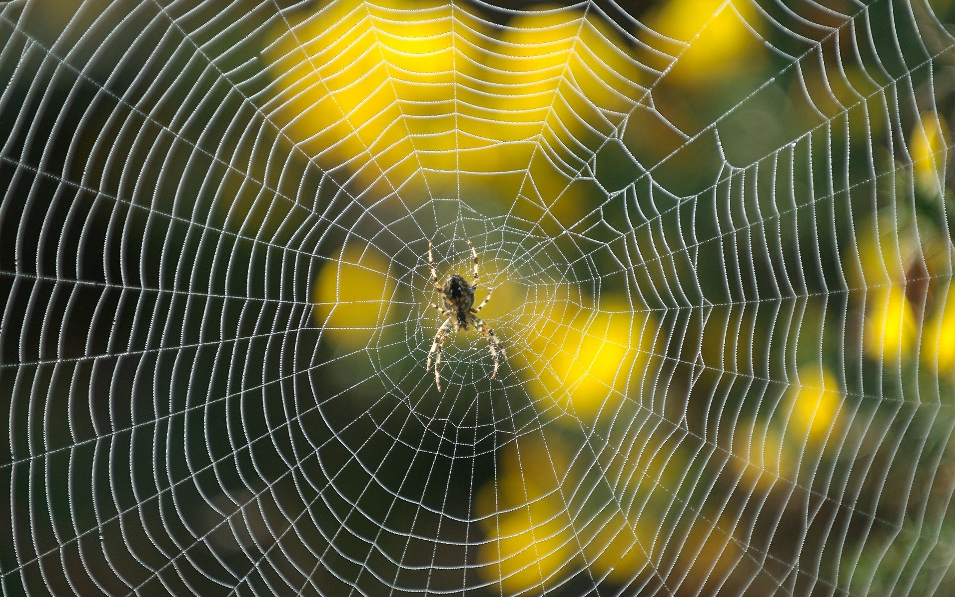 0 Spider Wallpapers Best Wallpapers Spider Wallpapers