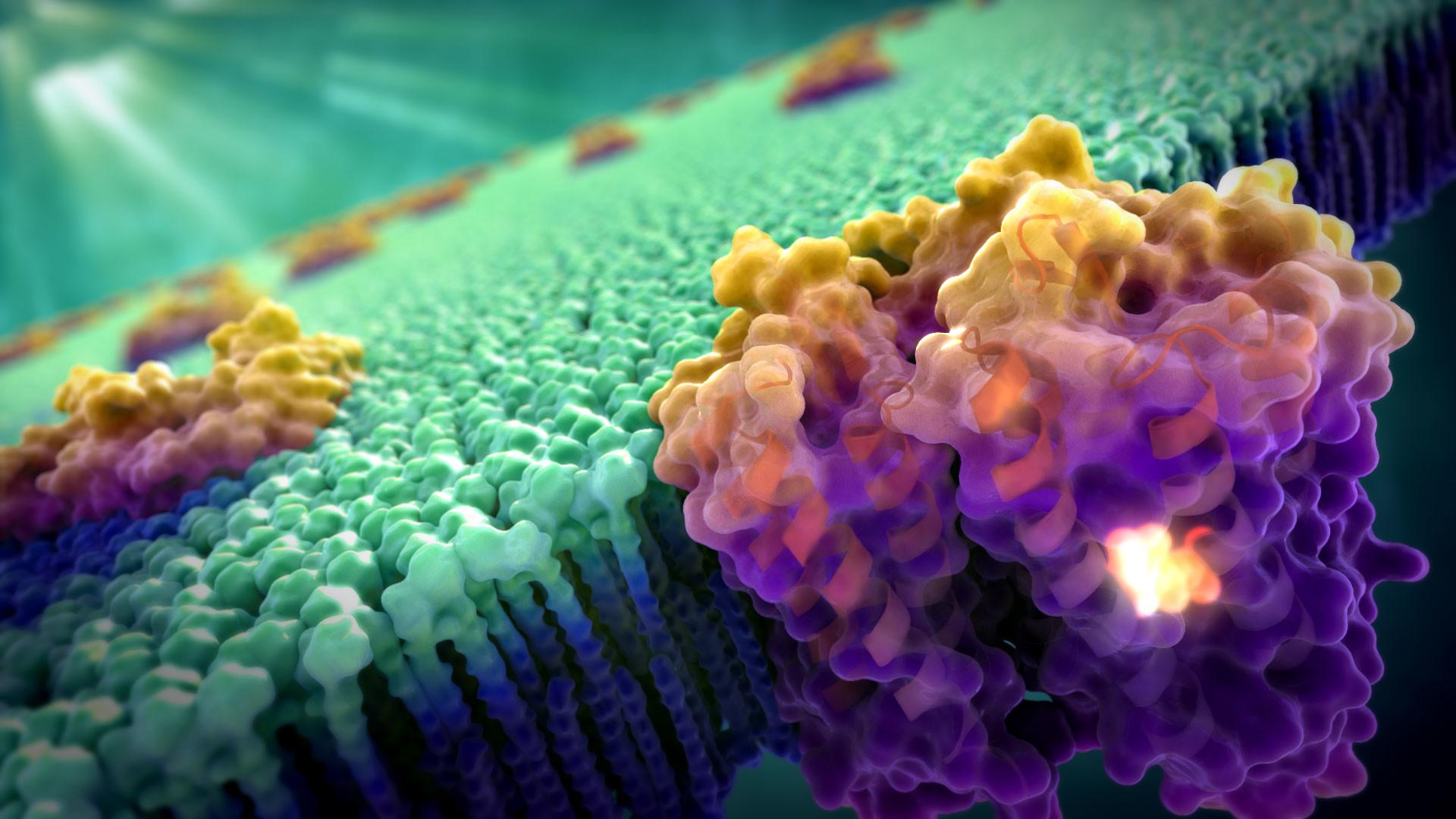 See the Light: Scientific Illustration – Medical & Scientific Video  Animation & Illustration by John Liebler