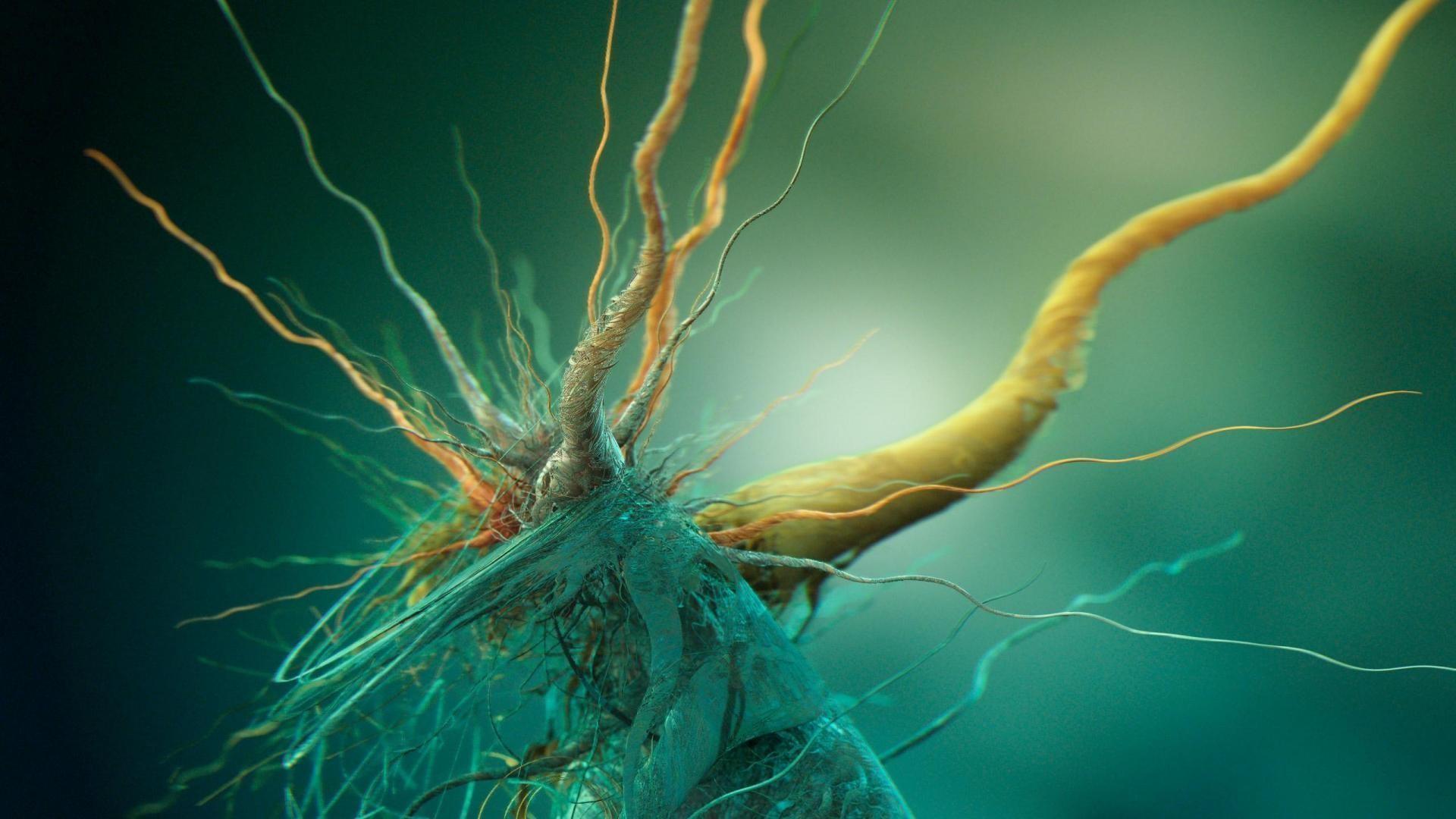 Cells Biology Brains Abstract HD Wallpapers, Desktop Backgrounds .