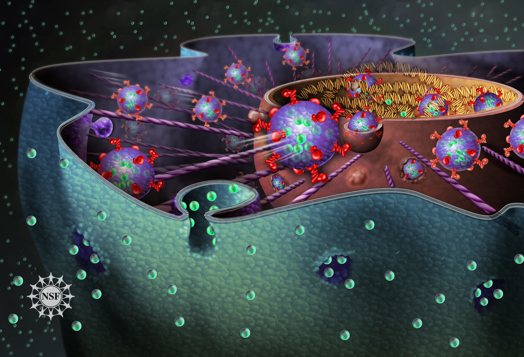 [Nature; Image: National Science Foundation]
