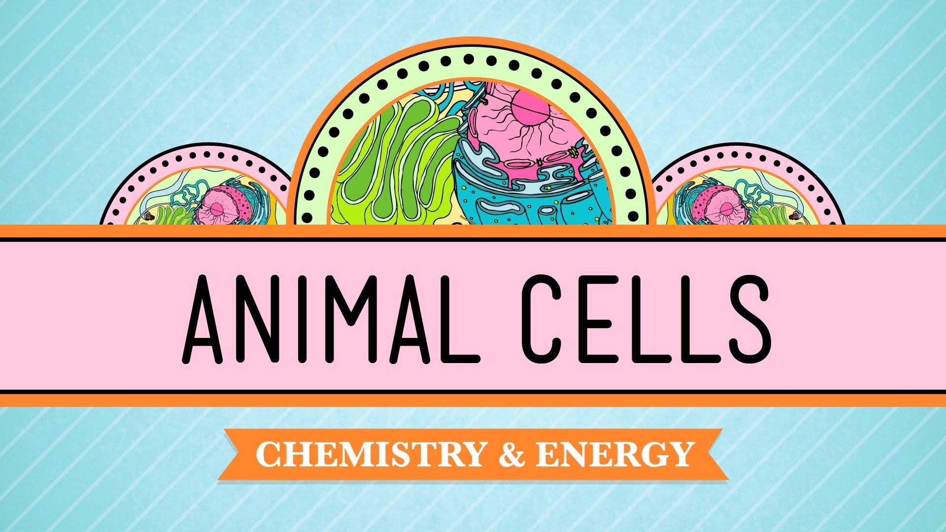 Eukaryopolis – The City of Animal Cells: Crash Course Biology #4 – YouTube