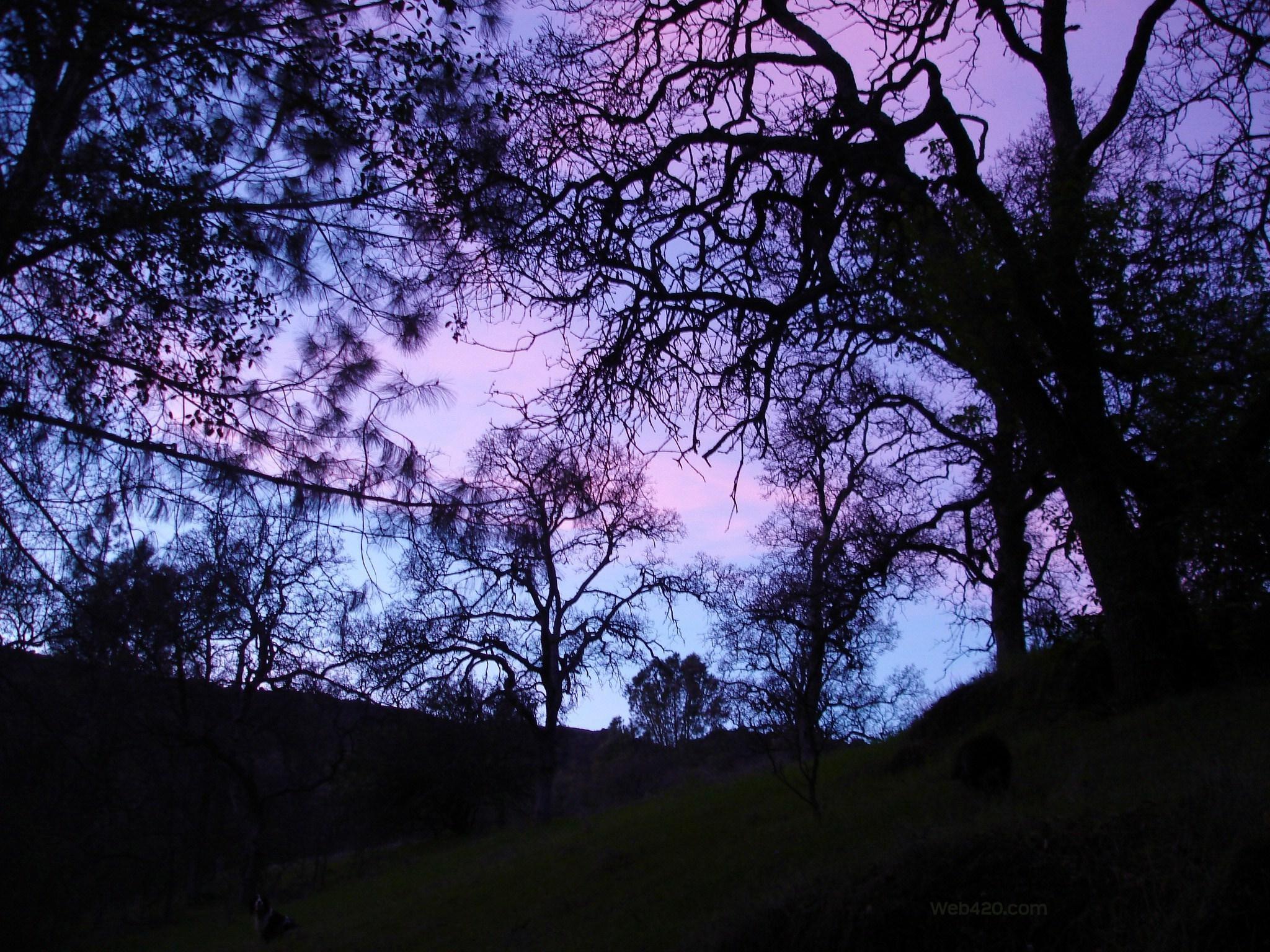 pastel goth Wallpaper   Back > Pics For > Pastel Goth Tumblr Wallpaper